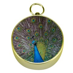 Peacock Feather Beat Rad Blue Gold Compasses