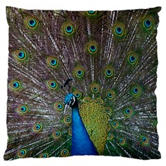 Peacock Feather Beat Rad Blue Large Flano Cushion Case (two Sides)