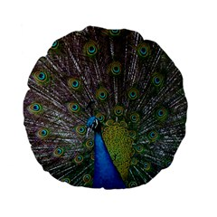 Peacock Feather Beat Rad Blue Standard 15  Premium Flano Round Cushions
