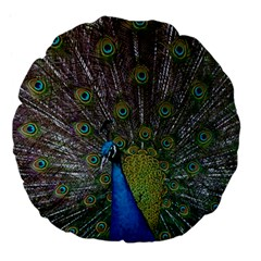 Peacock Feather Beat Rad Blue Large 18  Premium Flano Round Cushions