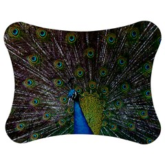 Peacock Feather Beat Rad Blue Jigsaw Puzzle Photo Stand (bow)