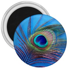 Peacock Feather Blue Green Bright 3  Magnets