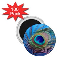Peacock Feather Blue Green Bright 1 75  Magnets (100 Pack)