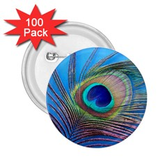 Peacock Feather Blue Green Bright 2 25  Buttons (100 Pack)