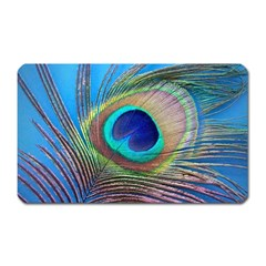 Peacock Feather Blue Green Bright Magnet (rectangular)