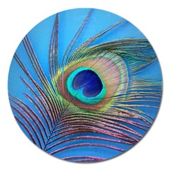 Peacock Feather Blue Green Bright Magnet 5  (round)