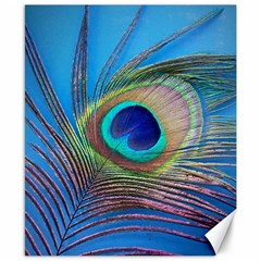 Peacock Feather Blue Green Bright Canvas 8  x 10