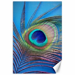 Peacock Feather Blue Green Bright Canvas 20  X 30