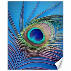 Peacock Feather Blue Green Bright Canvas 11  X 14