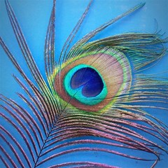 Peacock Feather Blue Green Bright Magic Photo Cubes