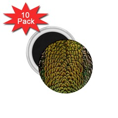 Peacock Bird Feather Gold Blue Brown 1 75  Magnets (10 Pack)