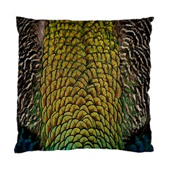 Peacock Bird Feather Gold Blue Brown Standard Cushion Case (one Side)