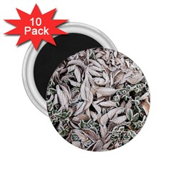 Ice Leaves Frozen Nature 2 25  Magnets (10 Pack)