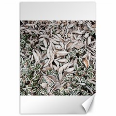 Ice Leaves Frozen Nature Canvas 20  x 30