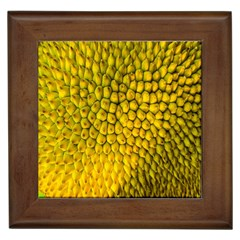 Jack Shell Jack Fruit Close Framed Tiles