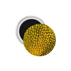 Jack Shell Jack Fruit Close 1 75  Magnets