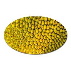 Jack Shell Jack Fruit Close Oval Magnet