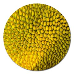 Jack Shell Jack Fruit Close Magnet 5  (round)