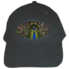 Bird Peacock Display Full Elegant Plumage Black Cap