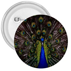 Bird Peacock Display Full Elegant Plumage 3  Buttons