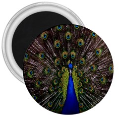 Bird Peacock Display Full Elegant Plumage 3  Magnets