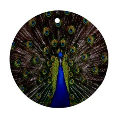 Bird Peacock Display Full Elegant Plumage Ornament (round)