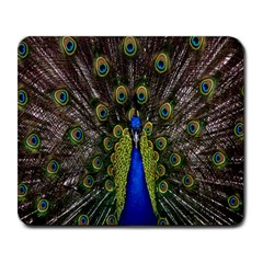 Bird Peacock Display Full Elegant Plumage Large Mousepads