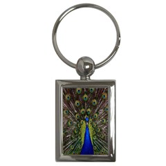 Bird Peacock Display Full Elegant Plumage Key Chains (rectangle)