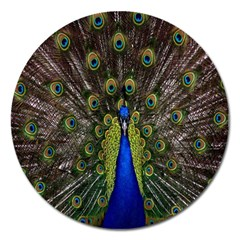 Bird Peacock Display Full Elegant Plumage Magnet 5  (round)