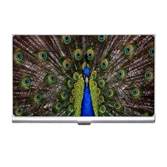 Bird Peacock Display Full Elegant Plumage Business Card Holders