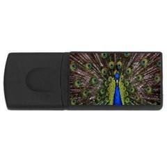 Bird Peacock Display Full Elegant Plumage USB Flash Drive Rectangular (1 GB)