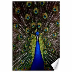 Bird Peacock Display Full Elegant Plumage Canvas 12  X 18