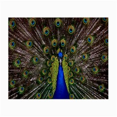 Bird Peacock Display Full Elegant Plumage Small Glasses Cloth (2 Side)