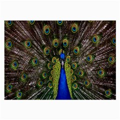 Bird Peacock Display Full Elegant Plumage Large Glasses Cloth