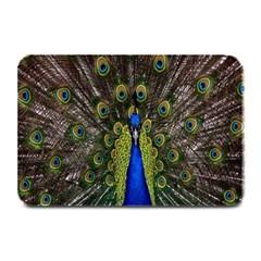 Bird Peacock Display Full Elegant Plumage Plate Mats