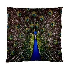 Bird Peacock Display Full Elegant Plumage Standard Cushion Case (one Side)