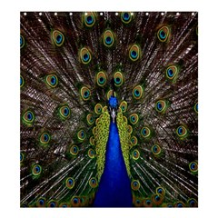 Bird Peacock Display Full Elegant Plumage Shower Curtain 66  X 72  (large)