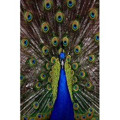 Bird Peacock Display Full Elegant Plumage 5 5  X 8 5  Notebooks