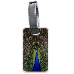 Bird Peacock Display Full Elegant Plumage Luggage Tags (two Sides)