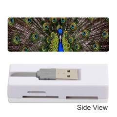 Bird Peacock Display Full Elegant Plumage Memory Card Reader (stick)