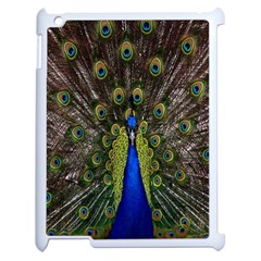 Bird Peacock Display Full Elegant Plumage Apple iPad 2 Case (White)
