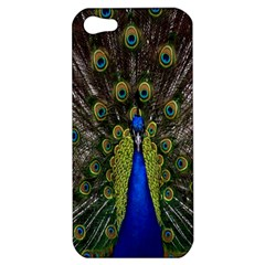 Bird Peacock Display Full Elegant Plumage Apple Iphone 5 Hardshell Case