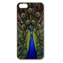 Bird Peacock Display Full Elegant Plumage Apple Seamless Iphone 5 Case (clear)