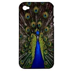 Bird Peacock Display Full Elegant Plumage Apple Iphone 4/4s Hardshell Case (pc+silicone)