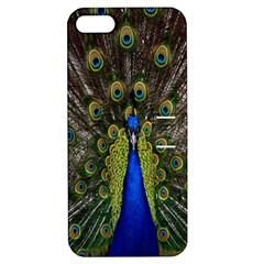 Bird Peacock Display Full Elegant Plumage Apple Iphone 5 Hardshell Case With Stand