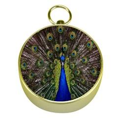 Bird Peacock Display Full Elegant Plumage Gold Compasses