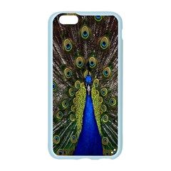 Bird Peacock Display Full Elegant Plumage Apple Seamless iPhone 6/6S Case (Color)