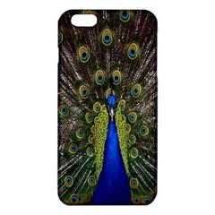 Bird Peacock Display Full Elegant Plumage Iphone 6 Plus/6s Plus Tpu Case