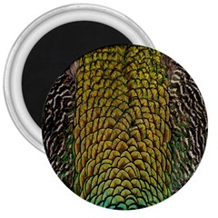 Colorful Iridescent Feather Bird Color Peacock 3  Magnets