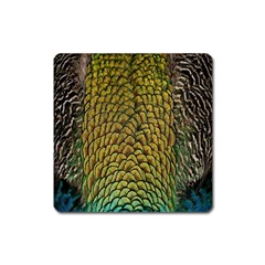 Colorful Iridescent Feather Bird Color Peacock Square Magnet